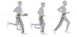 Image of a person running with one leg modeled as a spring