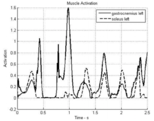 Muscle activation in the gastrocnemius and soleus during the rock step