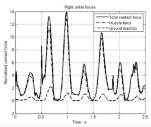 Componentized contact forces in the right ankle during the rock step