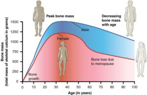 Bone mass changes with age, peaking for both genders at around 30-40 years old.