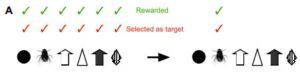 A diagram showing archerfish potential targets. Once the archerfish was only getting consistently rewarded for a single kind of target, insects, that's the only target it would shoot at