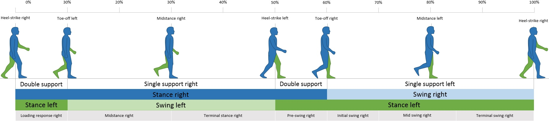 The steps that make up the human walking cycle. Order of steps: heel-strike right, toe-off left, midstance right, heel-strike left, toe-off right, midstance left, hell-strike right. The body spends the time between heel-strike and toe-off with double support and the midstances are single-leg support.