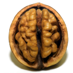 Picture of a walnut which has a strong similarity to a human cerebral cortex