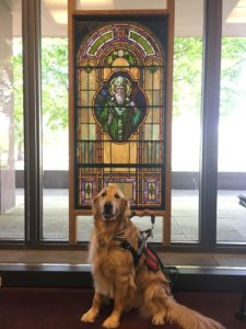 photo of service dog named Paddy