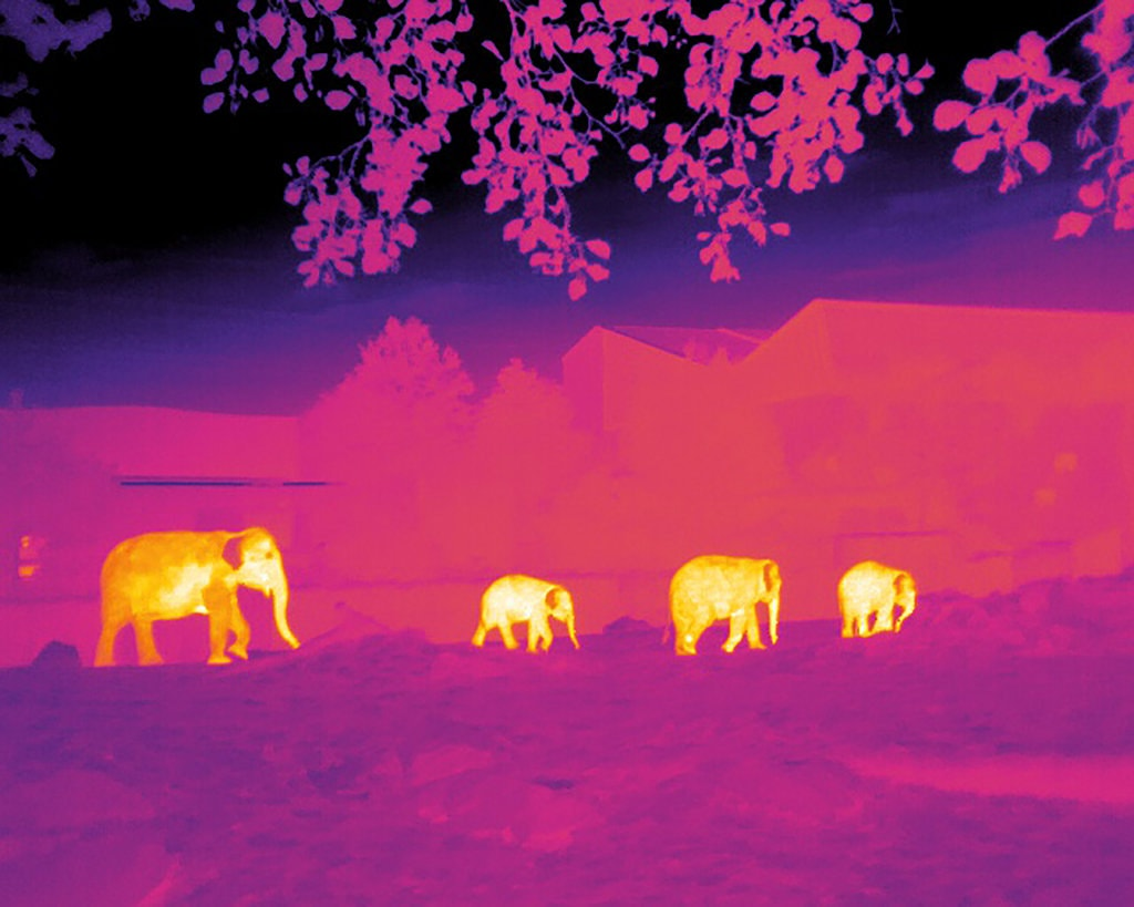 A thermal image of elephants; the animals are much brighter compared to their environment.