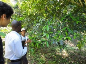 Maurice listens to a pepper oil farmer explain the harvest process