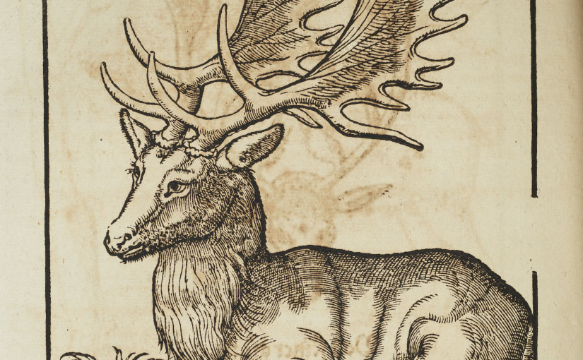 "Color Our Collections: Conrad Gessner's ""Animal Book"""
