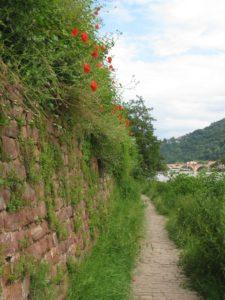 The Philosopher's Walk along the Neckar River in Heidelberg